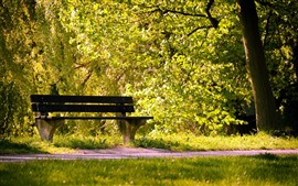 Park, trees, green leaves, bench, hazy