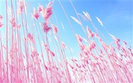 Cañas rosadas, cielo