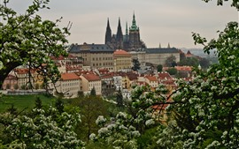 Prague, Czech Republic, city, flowers