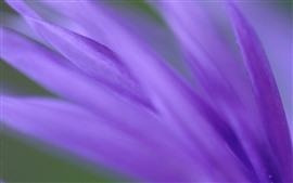 Aperçu fond d'écran Macro photographie de pétales violets, brumeux