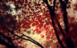 Preview wallpaper Red maple leaves, trees, autumn, hazy