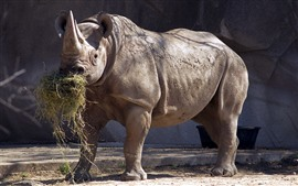 Носорог ест траву