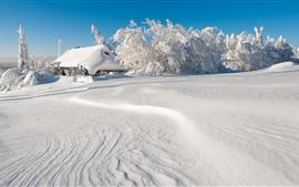 Густой снег, деревья, дом, белый мир, зима