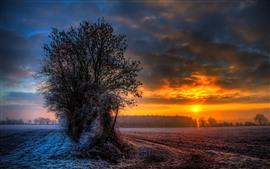 Деревья, иней, поле, облака, зима, закат