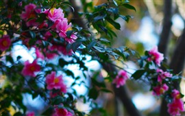 Preview wallpaper Twigs, pink flowers bloom, green leaves, park
