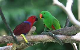 Preview wallpaper Two parrots, red and green