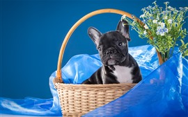 Preview wallpaper Black dog, basket, blue silk, flowers