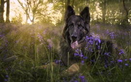 Preview wallpaper Black dog, flowers, trees, sunshine