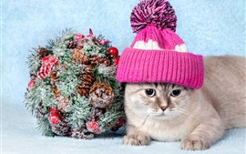 Preview wallpaper Cute cat, hat, snow, decoration
