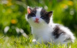 Preview wallpaper Cute kitten, cat baby, grass