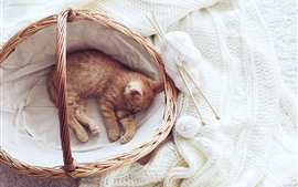 Cute kitten sleeping in basket, white sweater