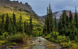 Glacier National Park, trees, mountains, stream, USA