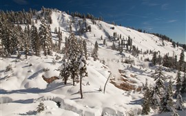 Lassen Volcanic National Park, trees, snow, winter, slope, USA