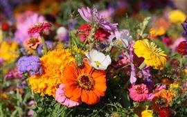 壁紙のプレビュー 多くの花、白、黄色、オレンジ、ピンク
