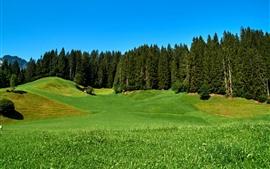 미리보기 배경 화면 Obernau, 독일, 나무, 집, 초원, 녹색