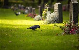 Um pássaro, grama, sepulturas