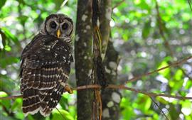 Preview wallpaper Owl look back, tree, bird