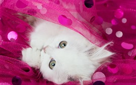 White kitten, cat, eyes, pink silk
