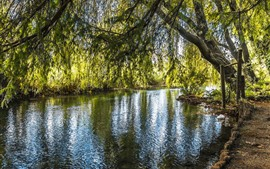 Preview wallpaper Willow, trees, river, green leaves, nature