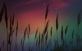 Preview wallpaper Aurora, reeds, stars, night