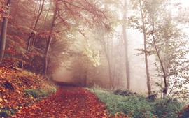 Autumn, trees, forest, foggy, path