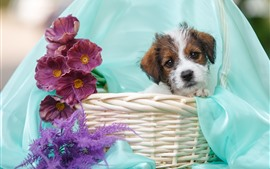 Preview wallpaper Cute puppy, basket, purple flowers