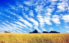 Preview wallpaper Fields, trees, blue sky, clouds