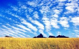 Поля, деревья, голубое небо, облака