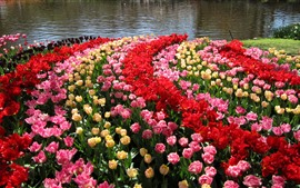 Preview wallpaper Netherlands, Keukenhof Gardens, tulips, pond
