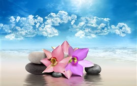 Preview wallpaper Pink flowers, stones, sea, beach, clouds, sun