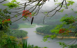 Preview wallpaper Puerto Rico, flowers, tree branch, mountains, river, fog