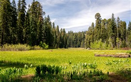 Preview wallpaper Sequoia National Park, trees, grass, green, USA