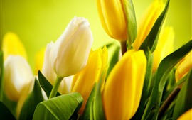 Preview wallpaper Some yellow tulips, green leaves