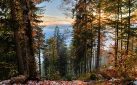 Autumn, trees, snow, forest, clouds