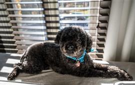 Perrito negro, ventana