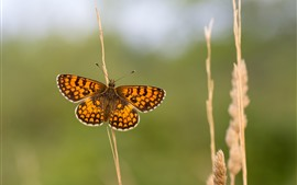 Preview wallpaper Butterfly, wings, grass, hazy