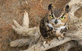 Preview wallpaper Cute little owl, look, eyes