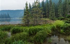 미리보기 배경 화면 Denali 국립 공원, 호스 슈 호수, 숲, 나무, 미국