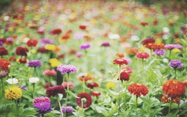 Preview wallpaper Different colors flowers, hazy