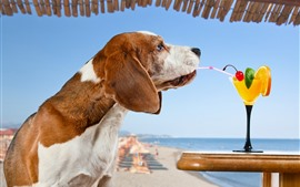 Preview wallpaper Dog drink cocktail, funny animal