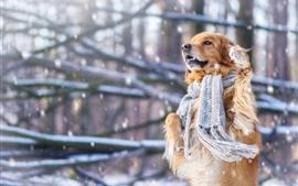 Perro, bufanda, nieve, invierno