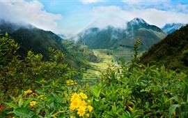 Ecuador, mountains, valley, fields, yellow flowers