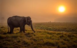 Слон, трава, восход солнца, утро