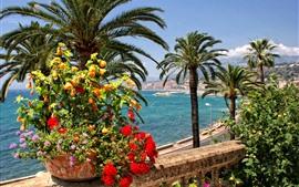 미리보기 배경 화면 프랑스, 멘톤, 꽃, 야자수, 도로, 해안