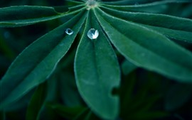 Green leaf, water droplets, dew, hazy