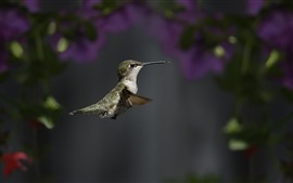 Preview wallpaper Hummingbird, flying, wings, beak, focus, flowers