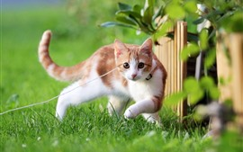 Preview wallpaper Kitten, pet, rope, grass, green, fence