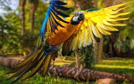 Aperçu fond d'écran Perroquet, macaw, vol, ailes, oiseau