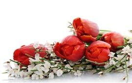 Красные тюльпаны, цветы, букет, белый фон