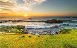 Preview wallpaper Sea, coast, green meadow, seagull, sunrise